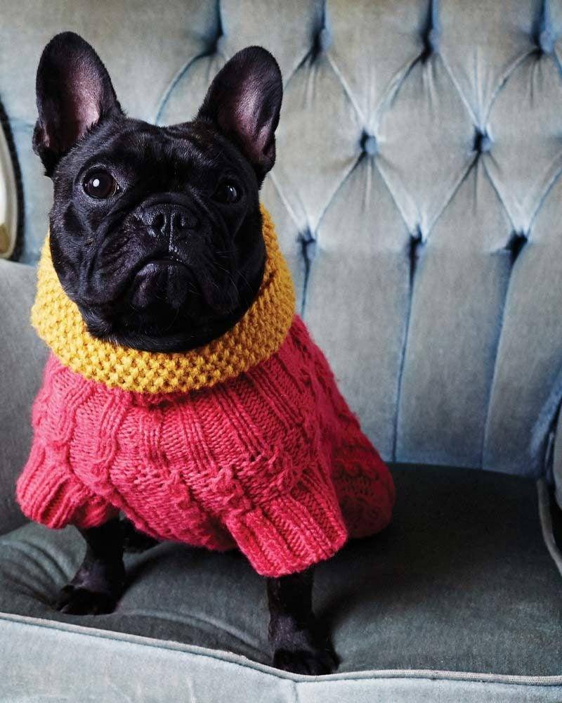 Hundepullover stricken mit verschiedenen Muster für Hals-und Bauchteil