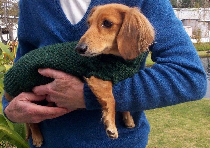 hundepullover-stricken-vor-kaelte-schutzen