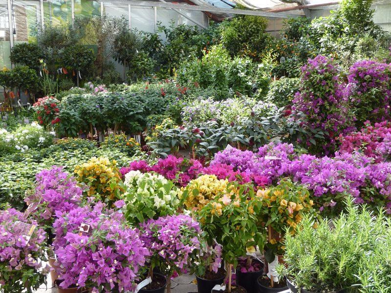 mediterrane pflanzen garten