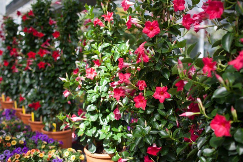 Mediterrane pflanzen f r den garten garten haus garten zenideen - Winterbepflanzung fur balkonkasten und kubel garten ...