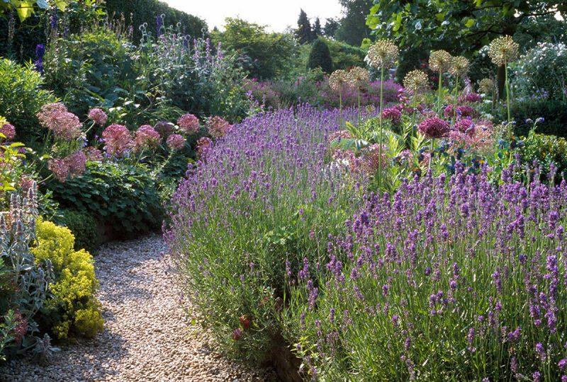 mediterrane pflanzen lila