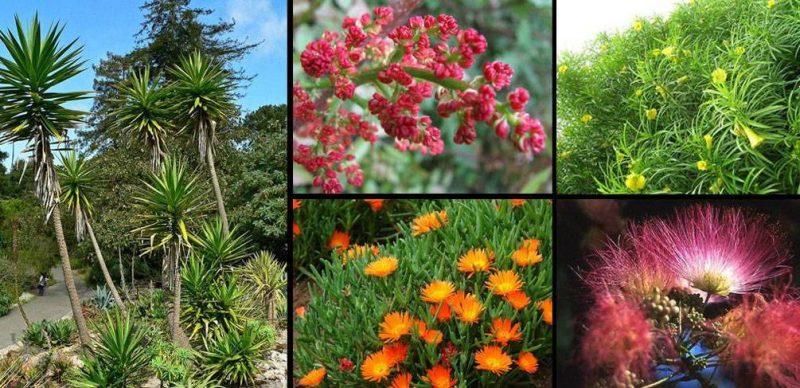 mediterrane pflanzen teuer