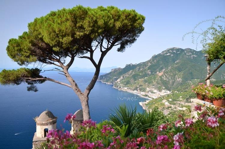 mediterrane pflanzen olibenbaum