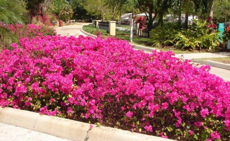Mediterrane Pflanzen Für Den Garten Garten Haus Garten Zenideen