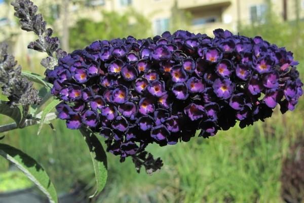 mediterrane pflanzen dunkel