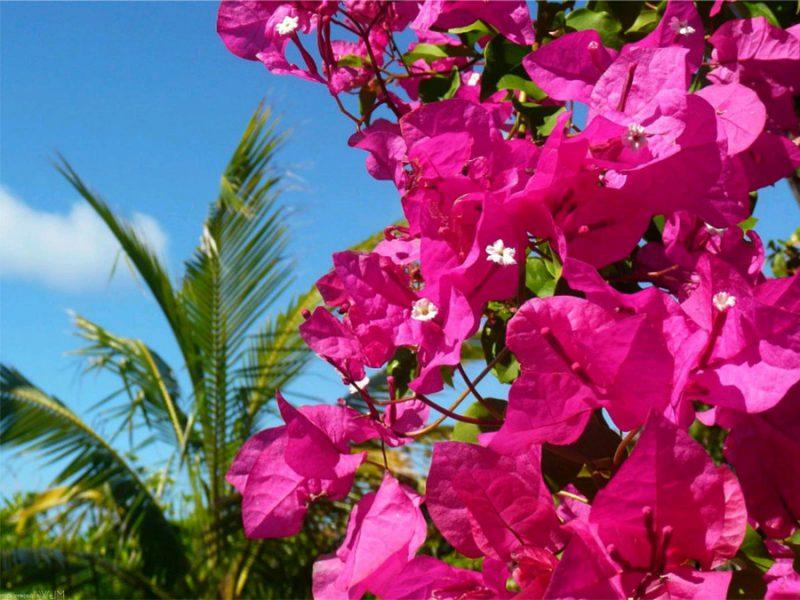 mediterrane pflanzen griechenland