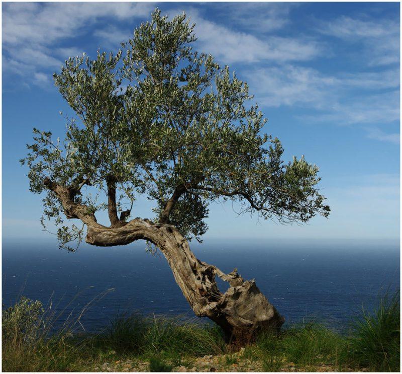 mediterrane pflanzen schon