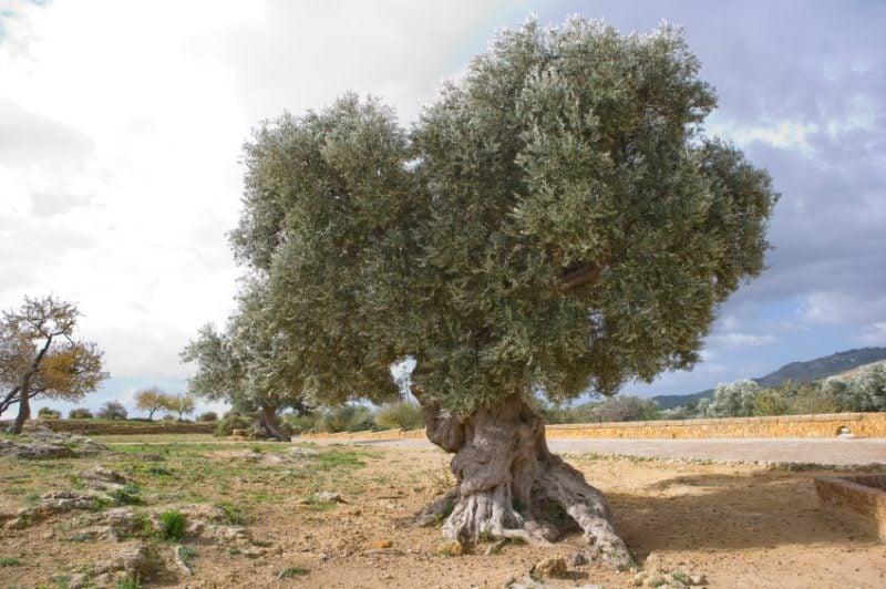 mediterrane pflanzen grune