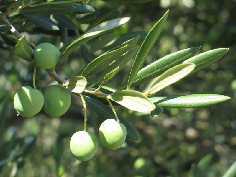 mediterrane pflanzen neu
