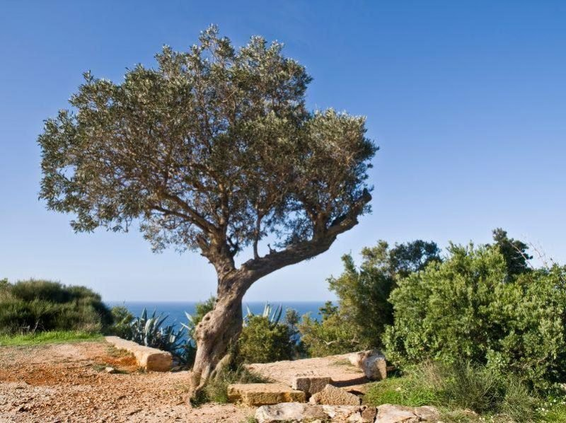 mediterrane pflanzen toll