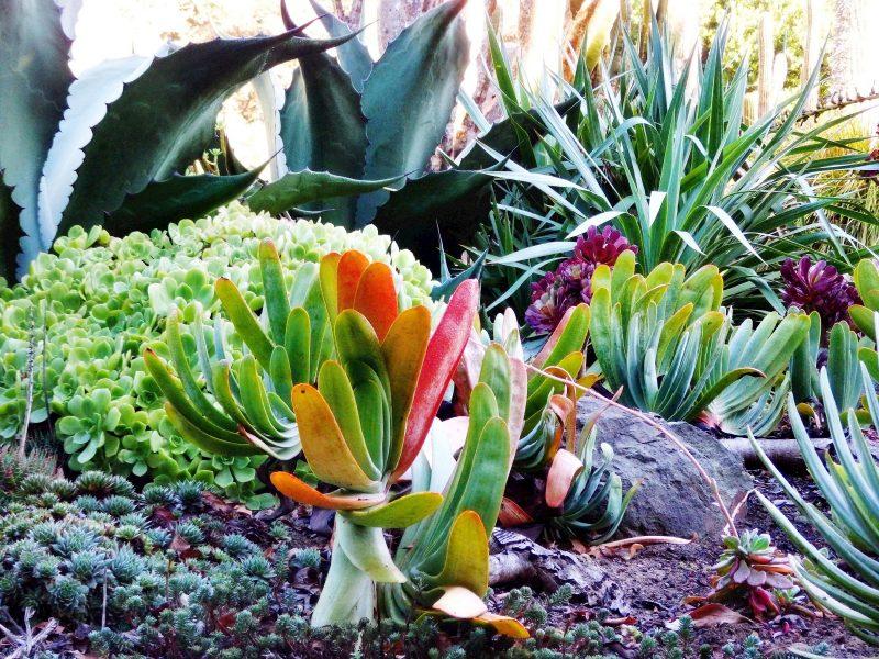 mediterrane pflanzen gut