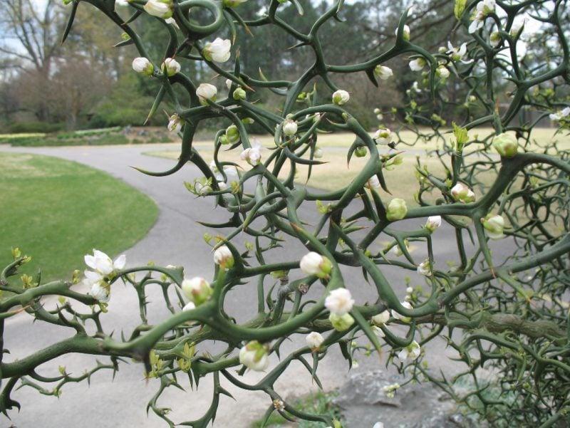 mediterrane pflanzen weiss