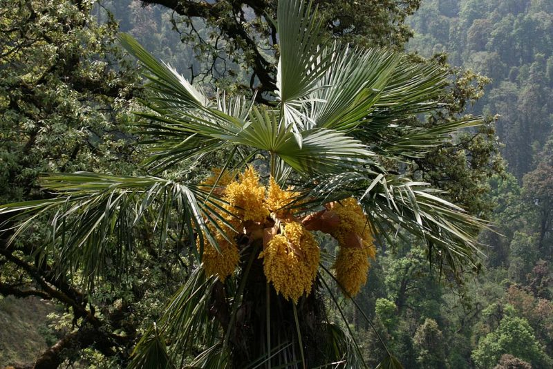 mediterrane pflanzen betrachtungsvoll