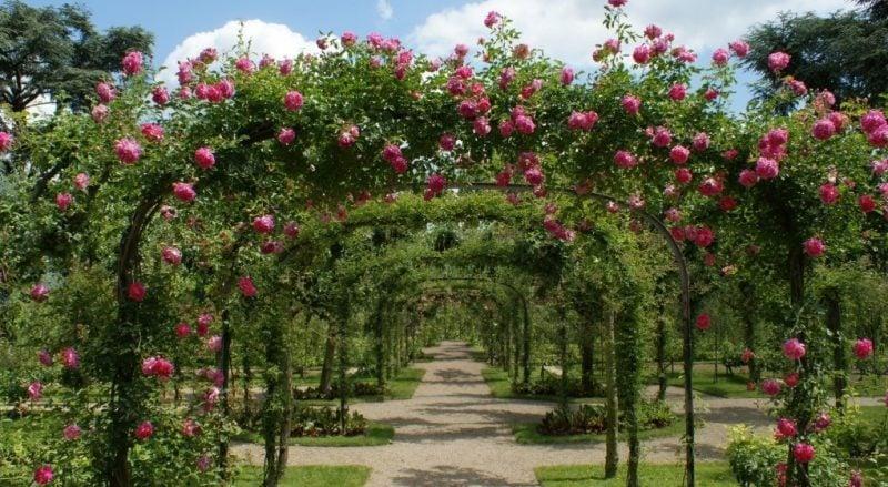 metall pergola mit zahlreichen rosen bepflanzt