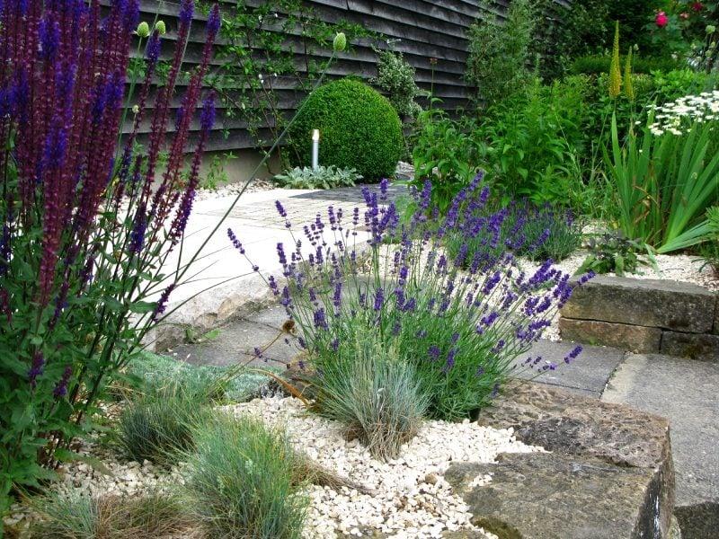 pflanzen fur steingarten lila lavendel mit schönem duft