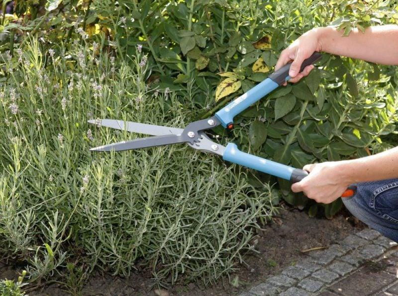 pflanzen fur steingarten sollten vorsichtig geschnitten werden
