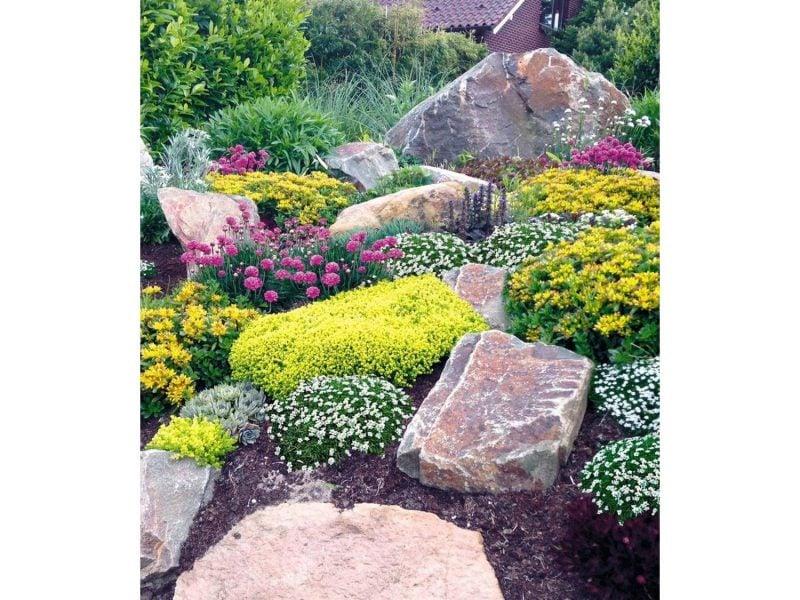 pflanzen fur steingarten buschige grasnelken in verschiedenen farben