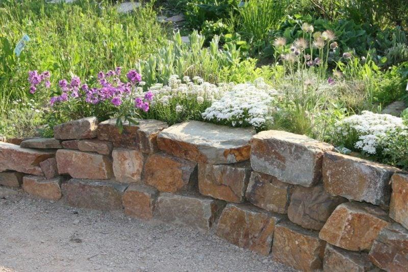 pflanzen fur steingarten schleifenblumen kombinieren sich mit anderen buschigen pflanzen sehr gut zusammen