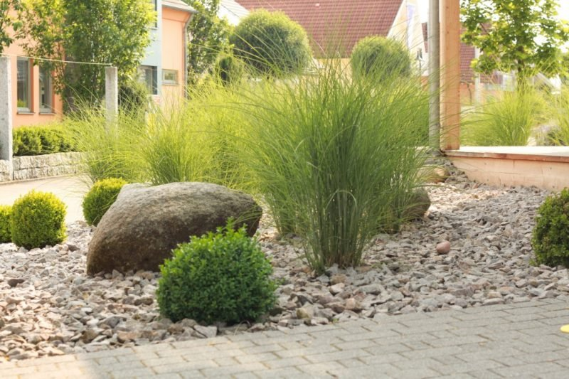 pflanzen fur steingarten grsser im kiesboden