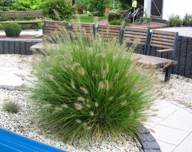 pflanzen fur steingarten gräser sind immergrün