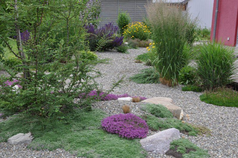 pflanzen fur steingarten müssen zueinander passen