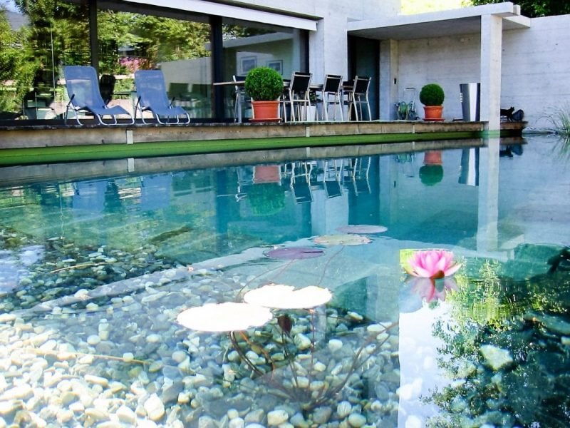 schwimmteich selber bauen lebendig