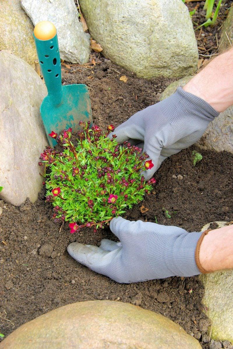 Beet mit Steinen anlegen: Bepflanzung Blumenbeet mit Steinen