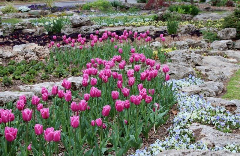 Steinbeet anlegen und mit lila Blumen den Garten bepflanzen