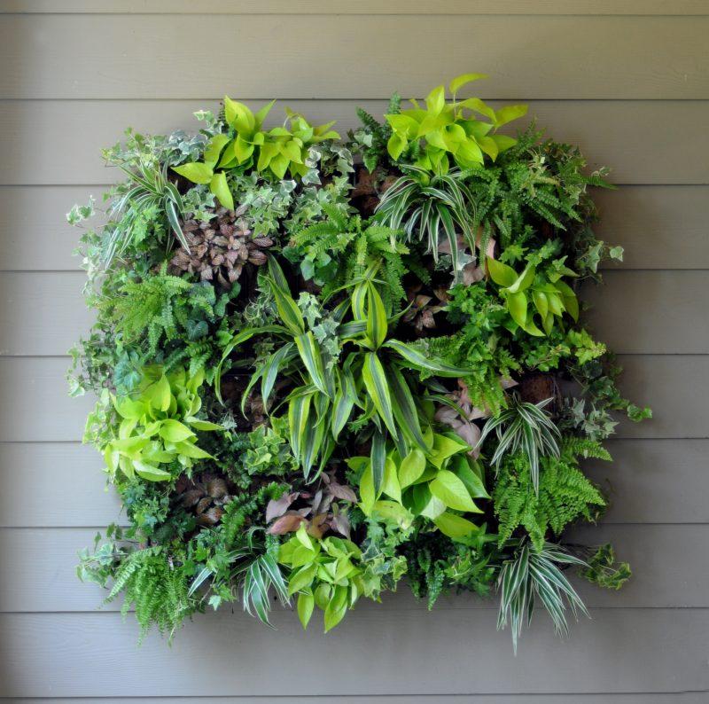 Vertikaler Garten können Sie im Bilderrahmen gestalten