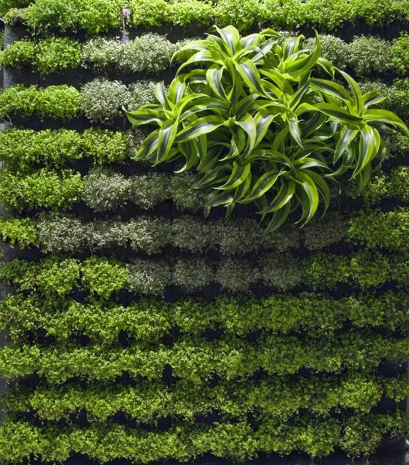 Vertikaler Garten bepflanzen Sie mit maximum 2 Pflanzenarten