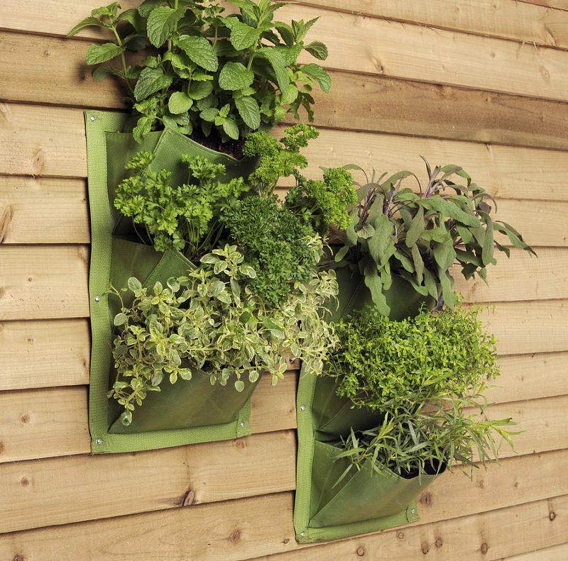 Vertikaler Garten aus Kräuter
