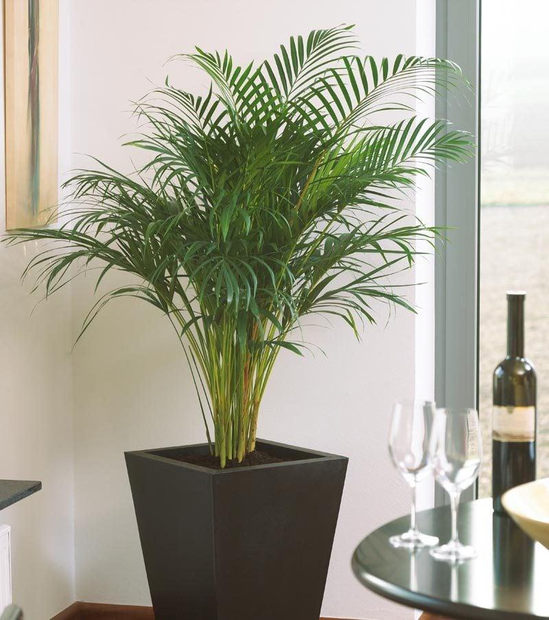 zimmerpflanzen bestimmen einfach