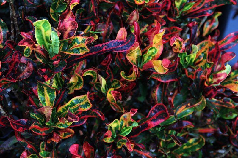 zimmerpflanzen bestimmen schon