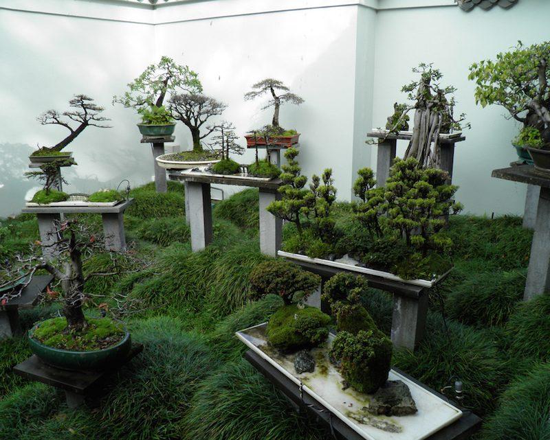 zimmerpflanzen bestimmen bonsai