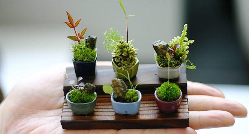 zimmerpflanzen bestimmen mini bonsai