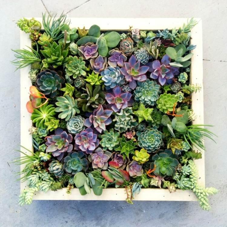 zimmerpflanzen bestimmen sukkulenten