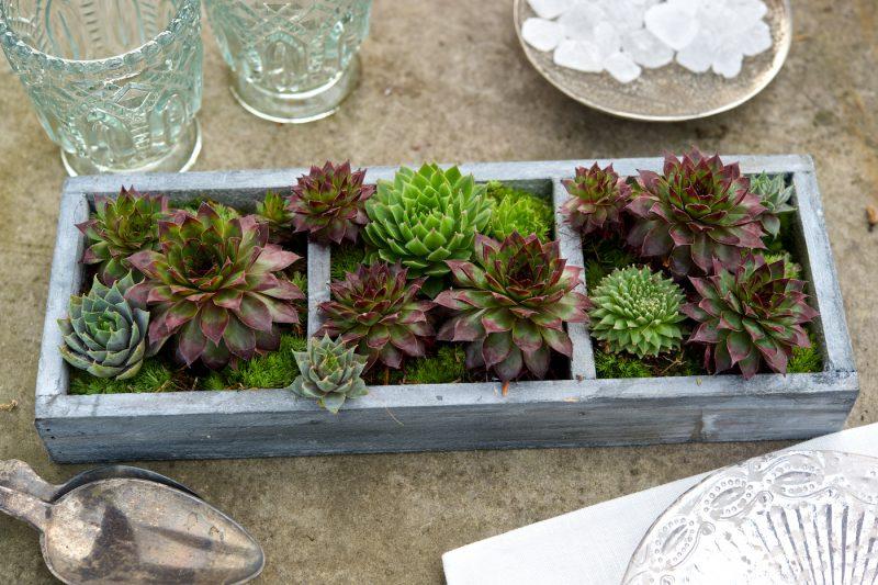 zimmerpflanzen ausw hlen aber wie innendesign traumh user zenideen. Black Bedroom Furniture Sets. Home Design Ideas