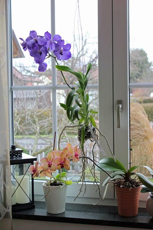 alle zimmerpflanzen bestimmen