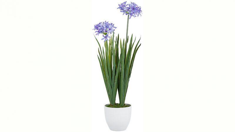 zimmerpflanzen bestimmen professionell