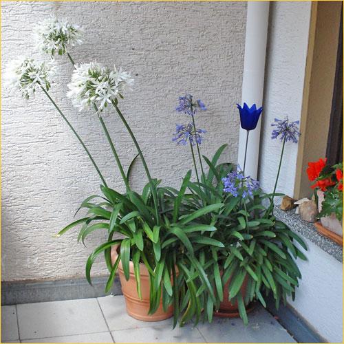 zimmerpflanzen bestimmen genau