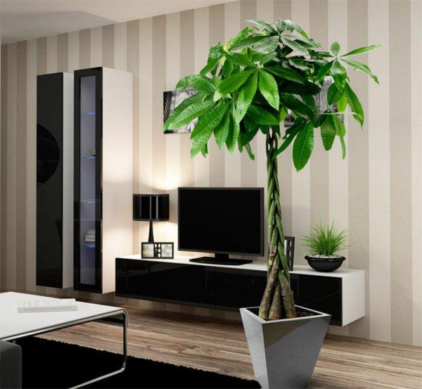 Zimmerpflanzen auswählen aber wie Innendesign