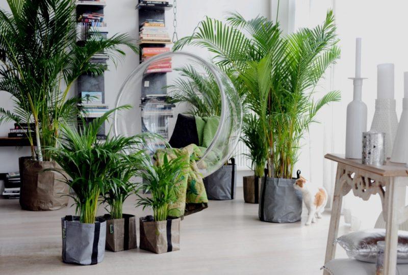 zimmerpflanzen bestimmen palmen