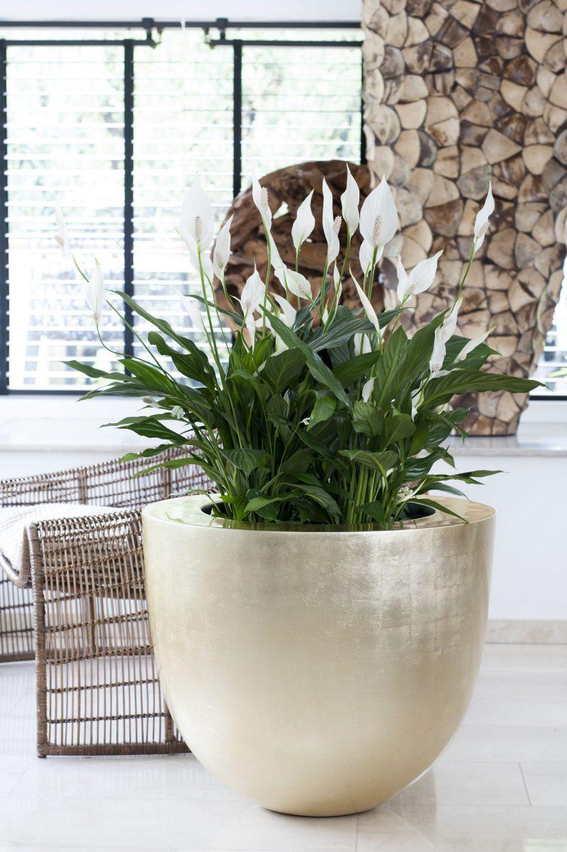 zimmerpflanzen bestimmen billig