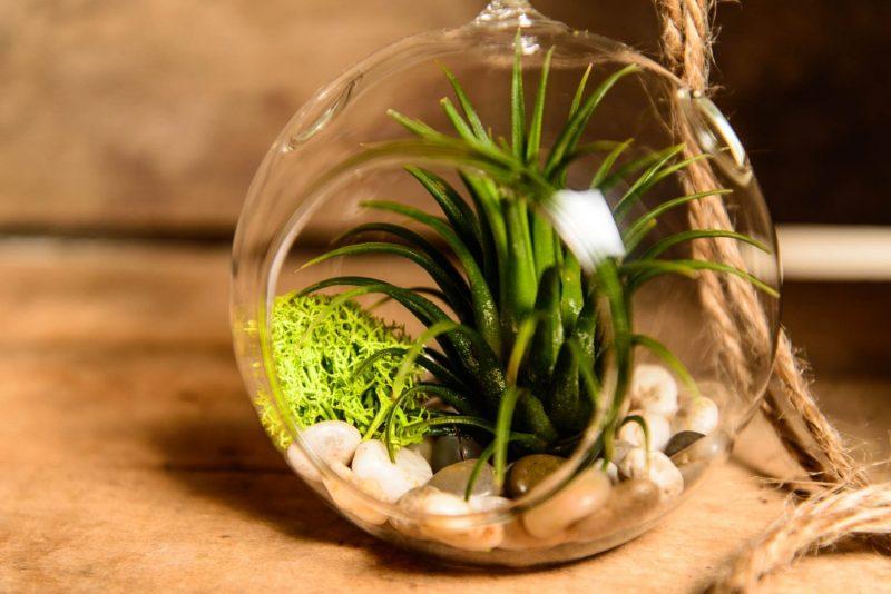 zimmerpflanzen ausw hlen aber wie innendesign. Black Bedroom Furniture Sets. Home Design Ideas