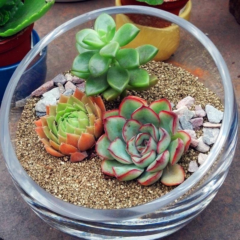 schone zimmerpflanzen bestimmen