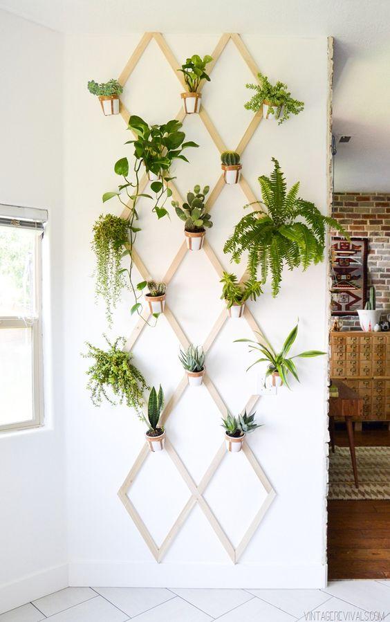 zimmerpflanzen bestimmen diy