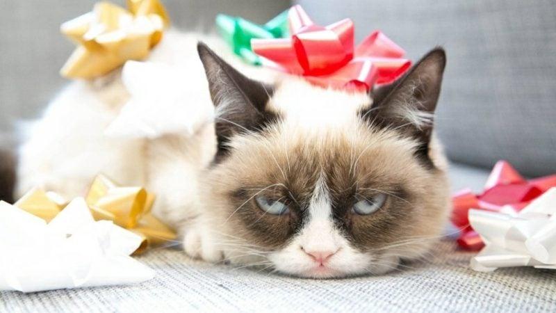 lustige Gruβkarten Geburtstag Katze verpackt