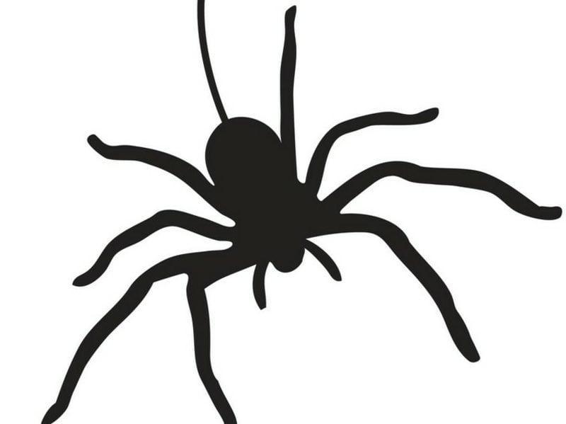 Halloween Kürbis Schnitzvorlagen Spinne