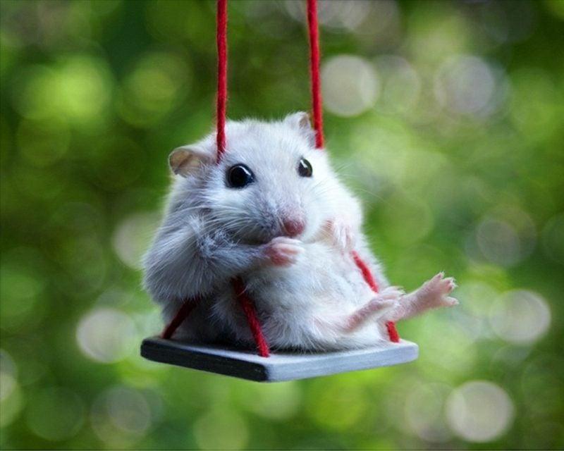lustige Gruβkarten Maus