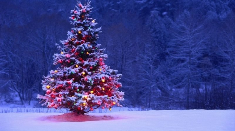 kreative Ideen zu Weihnachten Tannenbaum im Garten schmücken